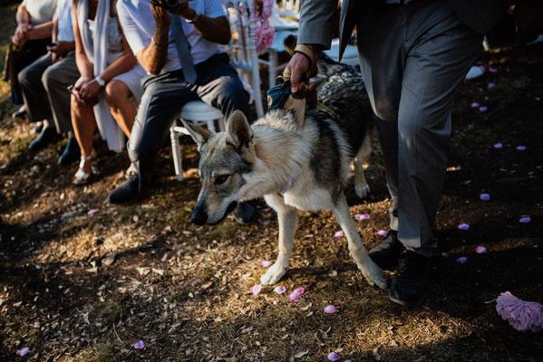 mariage loup