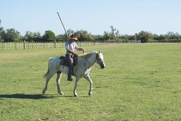 chevaux camargue mariage