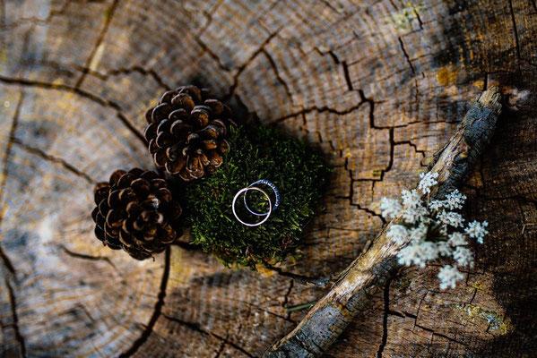 alliances foret mousse arbre