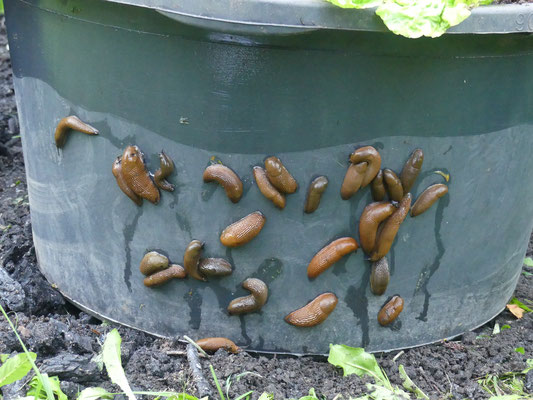 Foto: Petra Schwem - SCHNEXAGON® im Test - Gartenbotschafter John Langley®