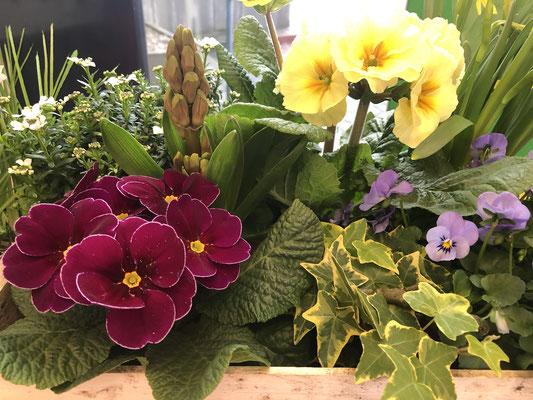 Frühling vom Blumenhof Pein aus Halstenbek