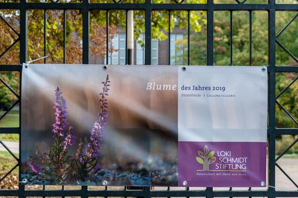 Foto: Hans Weber - Blume des Jahres 2019 in Planten un Blomem der Loki Schmidt Stiftung