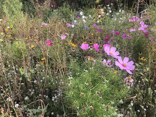 Planten un Blomen blüht auf