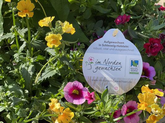 Foto: Petra Schweim - Pressetermin: Gütezeichen SH für Zierpflanzen aus der Region - im Norden gewachsen®