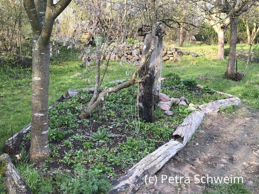 Fotos: Petra Schweim #Appelbarg - Staudenpflanz- und Aussaatzeit