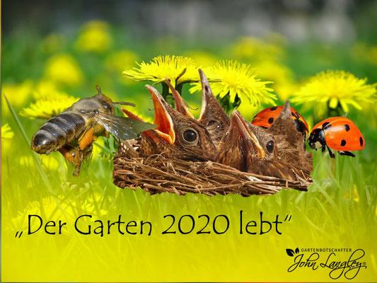 """VISUELL VORGESTELLT IN BARGTEHEIDE- """"DER GARTEN 2020 LEBT"""""""