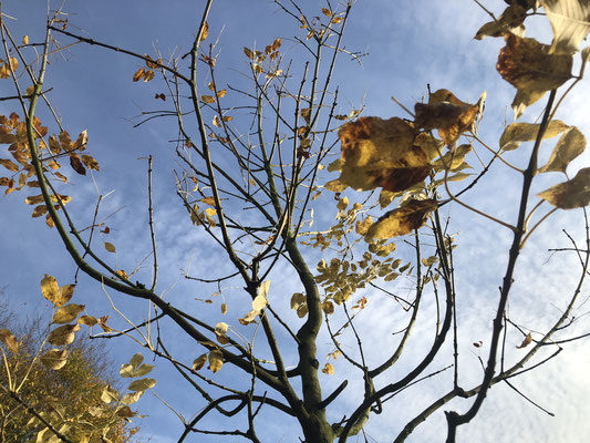 Fotos: Petra Schweim - Pflanzaktion Bienenweide in Fredenbeck unterstützt von der Niedersächsischen BINGO - Umweltschutzstiftung