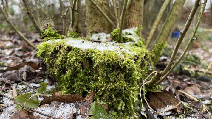 Foto: Petra Schweim - Projekt Appelbarg (Homepage - www.gartenbotschafter.info