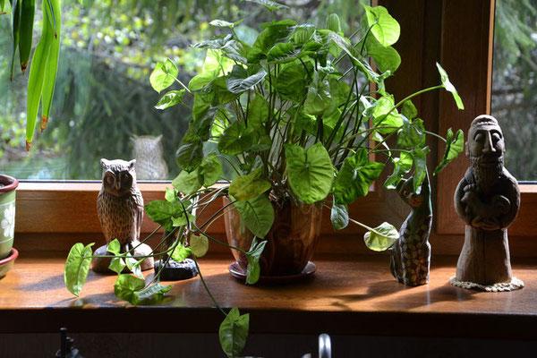Schmale grüne und blühende Indoorgärten lieben helles Licht