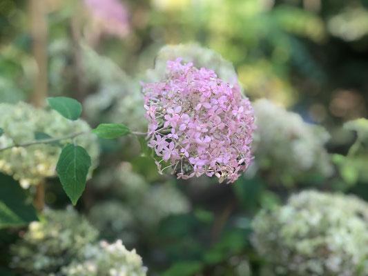 """Wie aus dem Bauerngarten oder in diesem Fall #Appelbarg gepflückten Blumen gehören zum aktuellen Sommertrend """"heimische Ländlichkeit"""". Fotos: Petra Schweim - Impression: John Langley - Ort: #Appelbarg"""