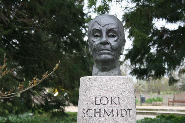 Blume des Jahres - Loki Schmidt - im Loki Schmidt Garten in Hamburg