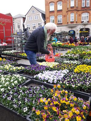 Foto: Petra Schweim - Gartenbotschafter John Langley Wochenmarkt in Husum