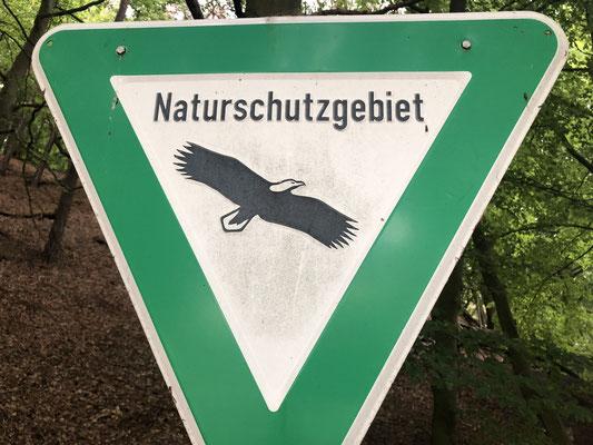 John auf den Spuren der Biber zwischen Tesperhude und Lauenburg unterwegs. Foto: Petra Schweim
