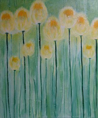 50 x 70   Tulpen