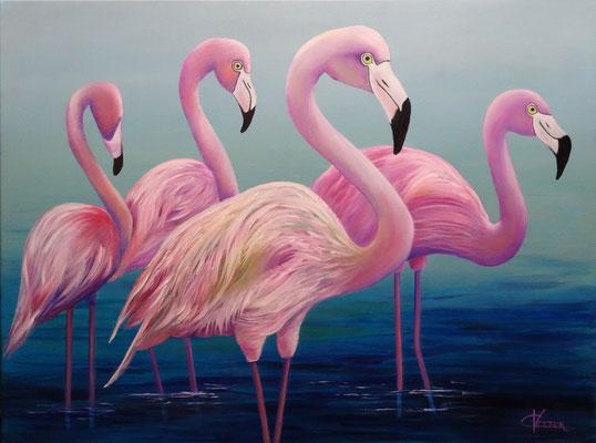80 x 60 | Flamingos