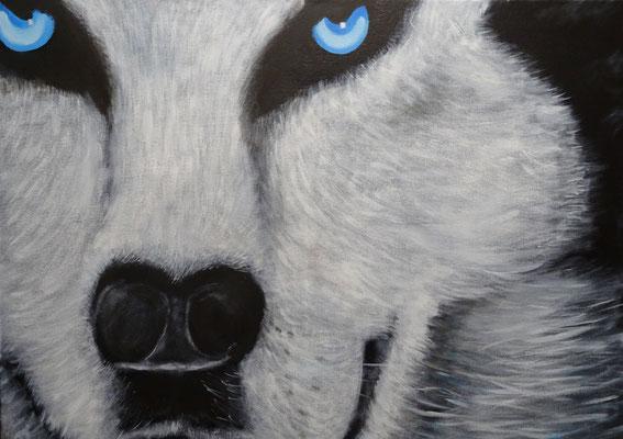 80 x 60 | Husky