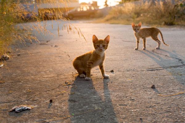 Katzenbabys Rhodos/ Photo Anna Grünauer