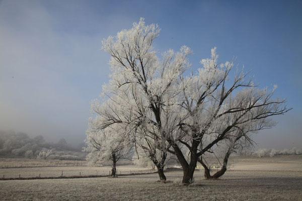 Lindl Hannes, Winterbeginn 1