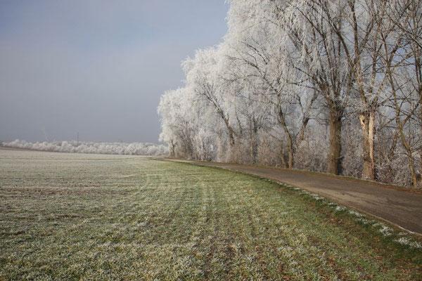 Lindl Hannes, Winterbeginn 2