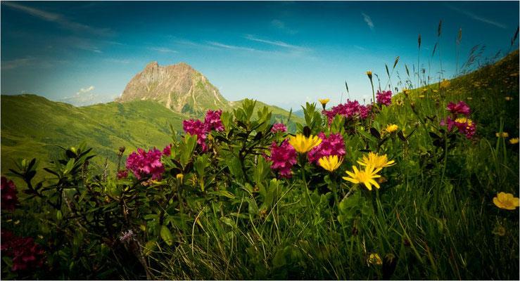 Wolfgang Hinz - Alpenblumen mit großem Rettenstein