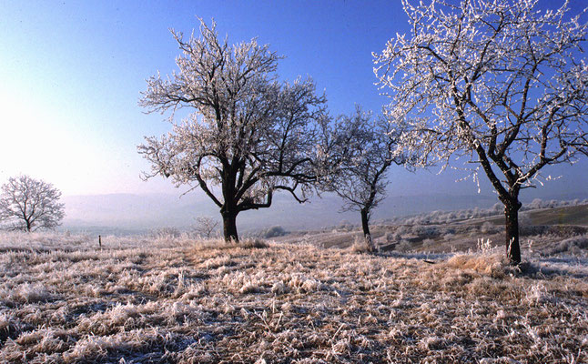 Horvath Josef, Wintermorgen