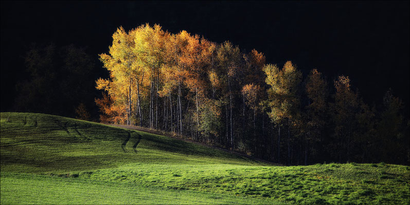 KUEN Andreas, Herbstlandschaft in Wald Arzl im Pitztal