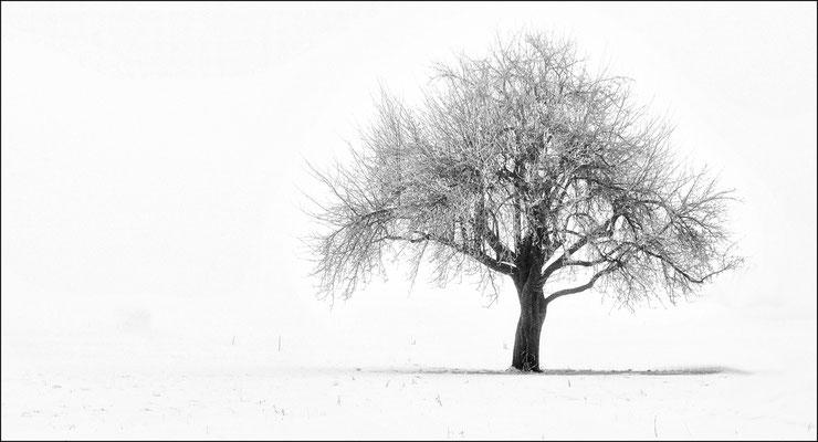 EBERLEIN Rainer - Baum im Winter, fotografiert in Strad
