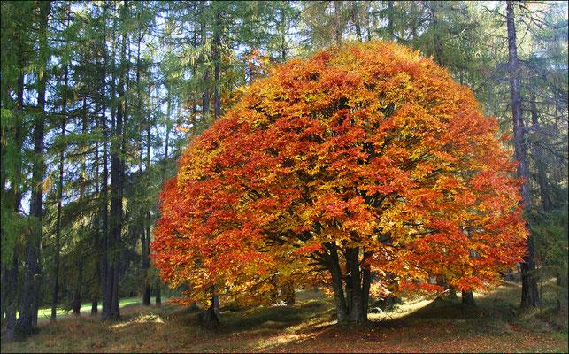ÖGG Florian, Herbstwald am Holzleitensattel