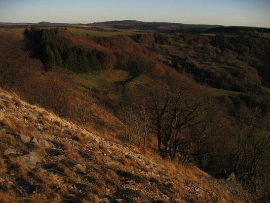 24.)  Herbstfarben am Buchenwäldchen