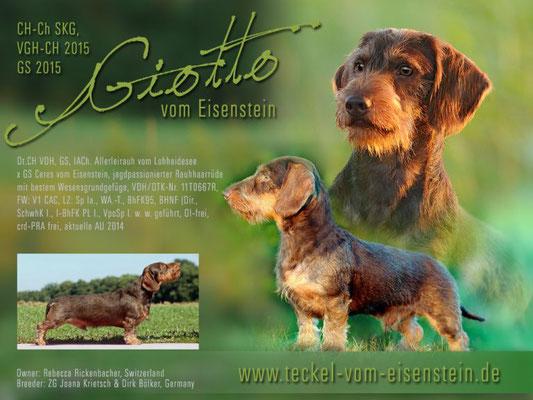 Giotto ist ein souveräner und selbstbewusster Rüde, kompromisslos und hart an Raub- und Schwarzwild, ruhig und gewissenhaft bei der Nachsuche, zuhause ein freundlicher und anhänglicher Familienhund, kinderlieb und besucherfreundlich.