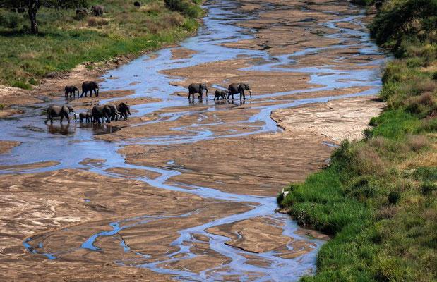 Troupeau d'éléphants à la rivière