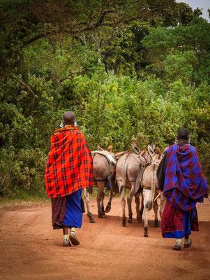 Les femmes Massaï conduisant les ânes