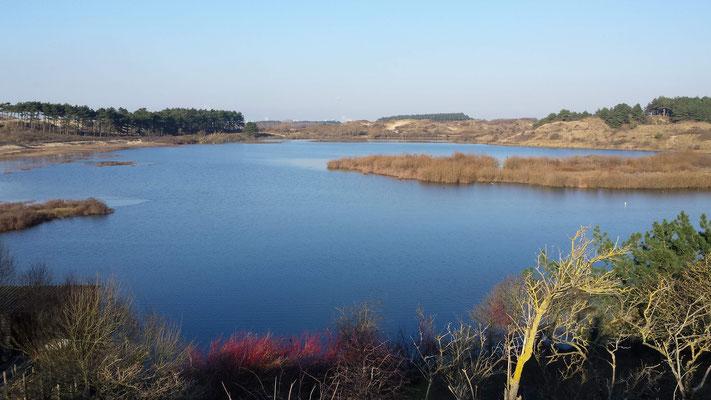 Wandelen bij het Vogelmeer Kennemerduinen Bloemendaal
