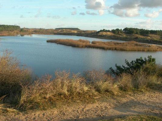 Vogelmeer Kennemerduinen