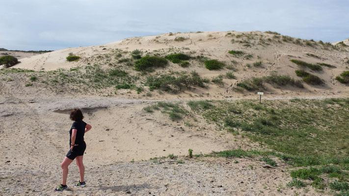 Lopen in de duinen bij Bloemendaal