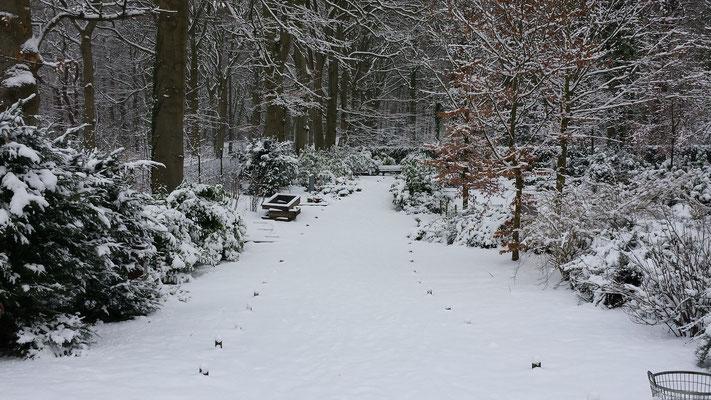 Wandelen in de sneeuw in de Kennemerduinen
