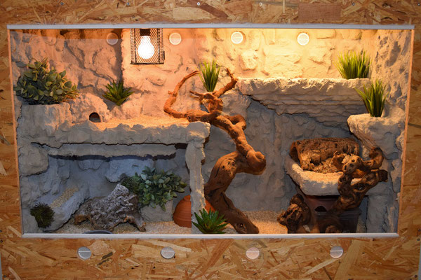 news 2017 haze reptiles. Black Bedroom Furniture Sets. Home Design Ideas