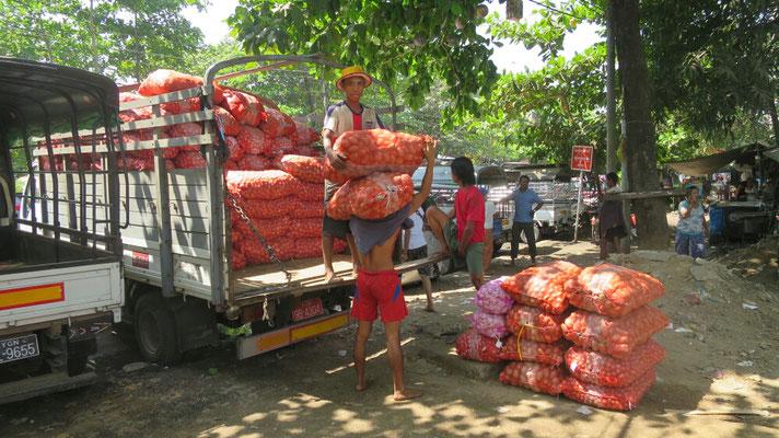 Ein junger Burmese trägt zwei schwere Säcke Kartoffeln, Zwiebeln, Knoblauch.