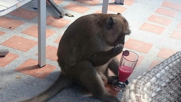 Dieser Gast konnte sich im Café nicht benehmen.