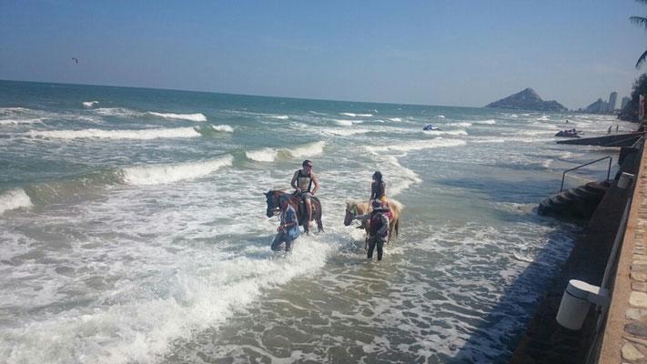 Wer hat Lust zum Reiten, es gibt viele Pferde am Strand.