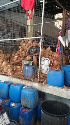 Hinter einem Gitter werden die Kokosnüsse aufgemachte.