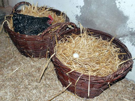 Weidenkorb als Legenest für Hühner