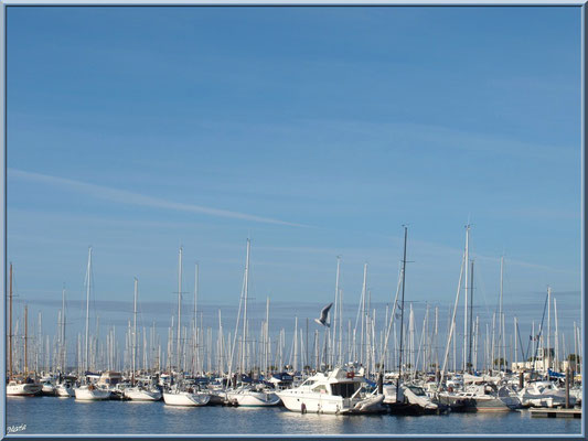 """Arcachon, """"Ville d'Automne"""", le port plaisance"""