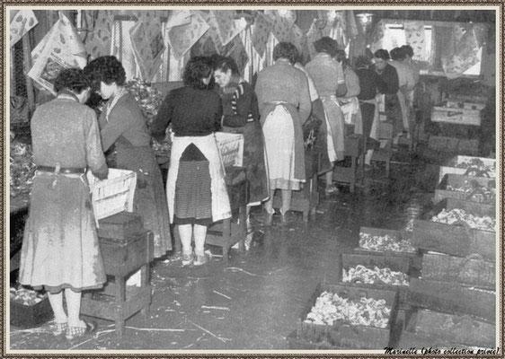"""Mises des huîtres en colis dans une cabane ou """"magasin"""" d'expédition"""
