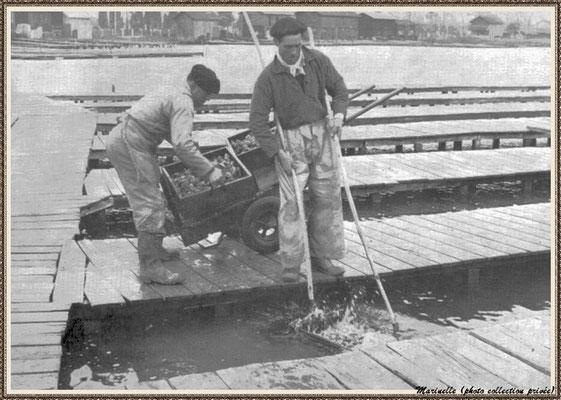 Levage des casiers d'huîtres dans un réservoir au port