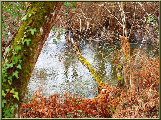 Méli-mélo végétal en bordure du Canal des Landes au Parc de la Chêneraie à Gujan-Mestras (Bassin d'Arcachon)