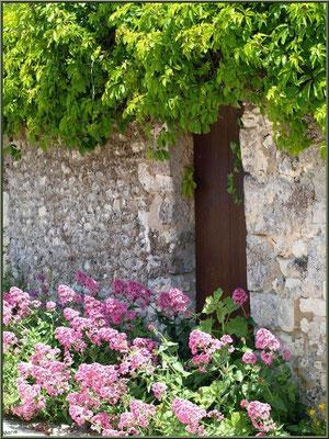 Porte ancienne à la treille et valérianes à Talmont-sur-Gironde (Charente-Maritime)