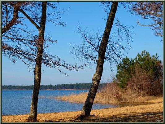 Lac de Sanguinet, aulnes, pins et roseaux (Landes)