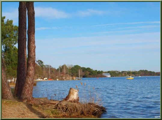 Bord de rive au Lac de Cazaux  (La Teste de Buch, Bassin d'Arcachon)