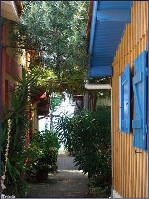Maisons et ruelle ombragée,  Village de L'Herbe, Bassin d'Arcachon (33)
